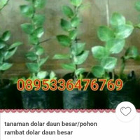Harga Daun Rambat Travelbon.com