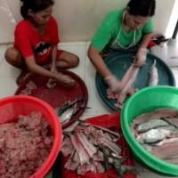 Harga Ikan Giling Untuk Pempek Hargano.com