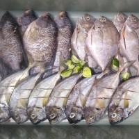 Harga Ikan Gurame Travelbon.com