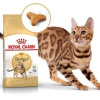 Harga Kucing Bengal Travelbon.com