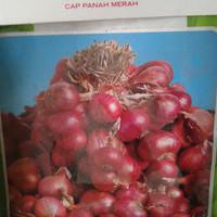 Bibit bawang merah unggul berkebun subur hibrida