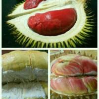 Paket 3 Bibit Durian kaki 1(merah, bawor, pelangi) + Anggur Red Prince