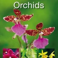 Orchids ( Segala Sesuatu tentang Tanaman Anggrek / DK ) - eBook