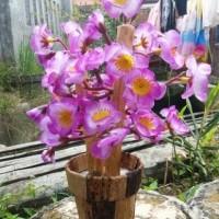 Harga Bunga Sakura Plastik Hargano.com
