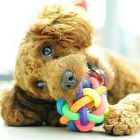 Mainan anjing kucing bola kerincing dog cat ball rattle toys