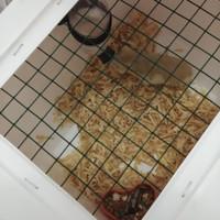 paket kandang saja plus 1 hamster boleh pilih jenis kelamin dan warna