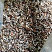 Jual 1 kg Benih Biji Pohon Daun Kelor Herbal bibit / biji / benih