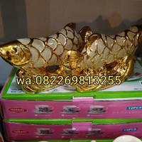 Katalog Ikan Arwana Kecil Katalog.or.id