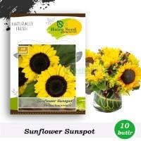 Benih-Bibit Bunga Matahari Sunspot (Haira Seed)