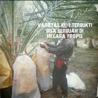Harga Jenis Kurma Dan Nya Hargano.com