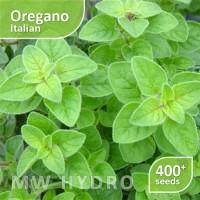 400 Seed - Benih Oregano Italian (Herbs/Herbal) - Import