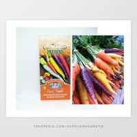 Harga bibit wortel pelangi carrot   Hargalu.com