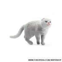 Info Scottish Fold Katalog.or.id