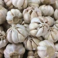Bawang putih varietas kating / 500gr