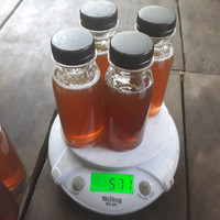 Harga madu kelulut madu trigona itama 100ml farm kota   Pembandingharga.com