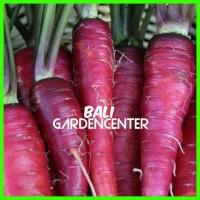 Harga benih biji bibit wortel ungu purple carrot   Hargalu.com