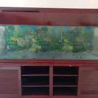 Aquarium 2 Meter Dengan Meja Kayu Semi Klasik