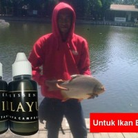 Essen Getah Katilayu Ikan Bawal   Master Essen