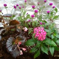 Taman mini dalam pot/parcel tanaman
