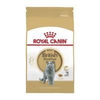 Harga Kucing British Shorthair Travelbon.com