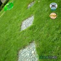 Rumput Jepang/Peking 1x1 Meter Murah