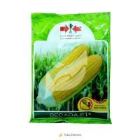 Original produk Benih Bibit Jagung Manis - Secada F1 (200 gr) termurah
