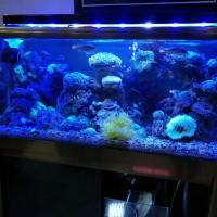 Jual Paket Aquarium Laut Murah Meriah - Kota Bekasi - mich ...