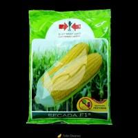Benih jagung Manis - Secada F1 (200 gr)