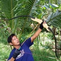 Busur Panah Natural Archery