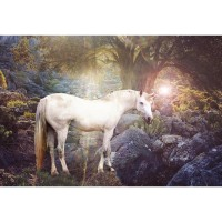 G-544 Vinyl Fairy Tale Theme Photography Backdrop Forest horse