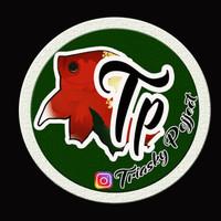 Jual Design Logo Ikan Hias Kab Indragiri Hulu Triaskyprojject Tokopedia