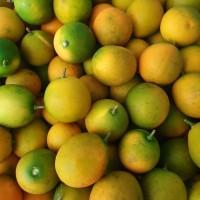 Buah Jeruk Kimkit / Kumquat / Nagami Import Fresh Per Dus