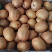 Buah Kiwi Hijau Green Fresh Import Grosir