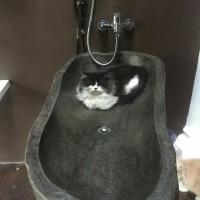 Bath up Batu Alam mini Wastafel batu
