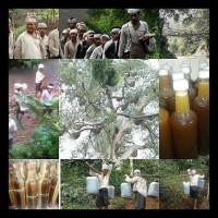 Harga berkualitas madu hitam hutan suku baduy 100 asli dan murni   Pembandingharga.com