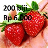 Benih Biji Bibit Strawberry Giant merah