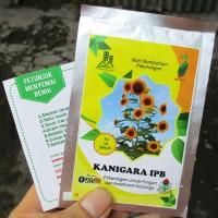 Sunflower Bunga Matahari Kanigara IPB