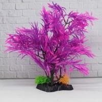Tanaman Aquarium bonsai plant T1105