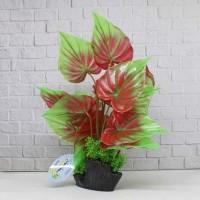 Tanaman Aquarium Bonsai plant T1108