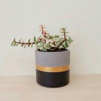 Pot Kaktus Mini Concrete Gold Line