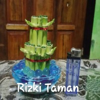 Souvenir Bambu hoki mini tanaman hidrogel lucky bamboo mangkok kaca