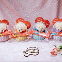 Coklat Valentine Parsel Cute Bear