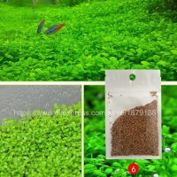 Bibit Rumput Air Dekorasi Aquarium Landscape Ornament - Love Grass