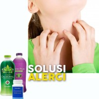 NoniPlus Klorofil Colostrum Synergy Alergi Dingin Kulit Gatal Terbaik