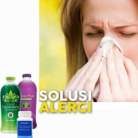 HERBAL OBATI Gatal Gatal Alergi (NoniPlus Klorofil Colostrum Synergy)