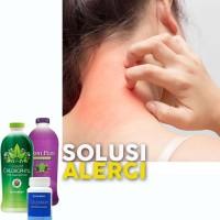 NoniPlus Chlorofil Colostrum Synergy Sembuhkan Alergi Debu Pada Kulit