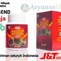 Kapsul Herbal Sarang Semut Asli - Walatra Sarang Semut Original
