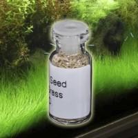 New Bibit Mini Hair Grass Seed Dasar Akuarium Aquascape Kemasan 3 ml