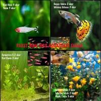 Hiasan Aquarium Paket Enam Ikan Hias Sumatra, Red Danio Guppy Molly
