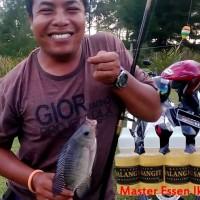 Essen Walang Sangit Untuk Ikan Nila